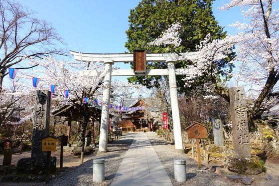 小諸 懐古神社 桜