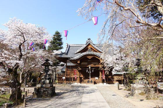 懐古神社 桜