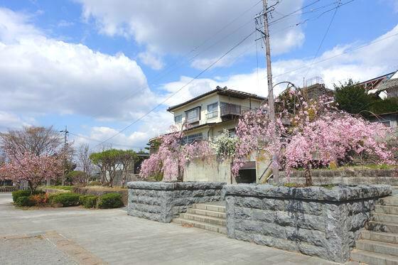 大手門公園 桜