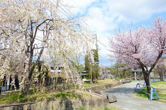 小諸城 大手門 桜