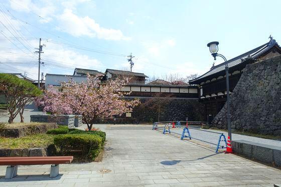 桜 小諸城 大手門