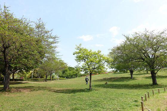なぎさ公園 展望の丘
