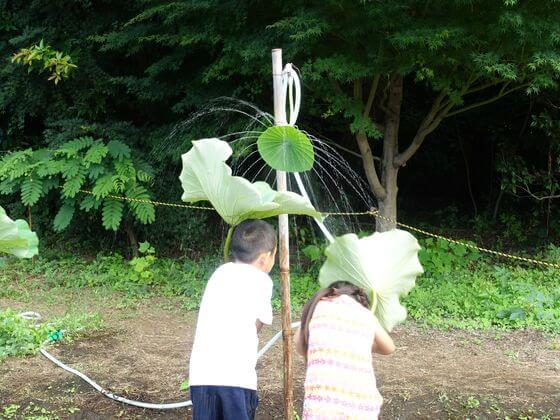 三溪園 蓮の葉シャワー