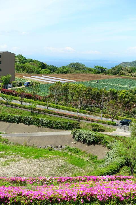 湘南国際村 景色