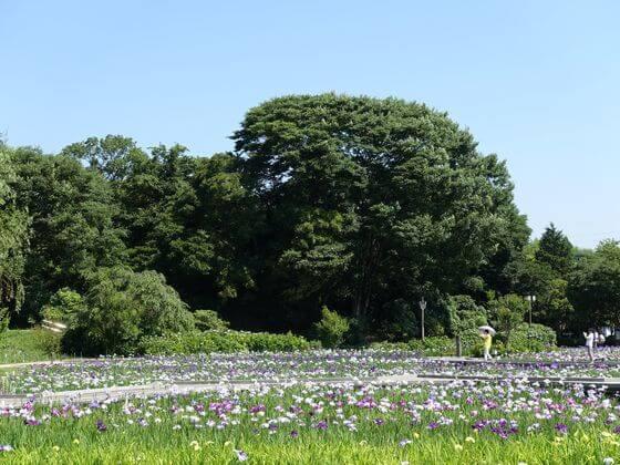 横須賀しょうぶ園 広さ
