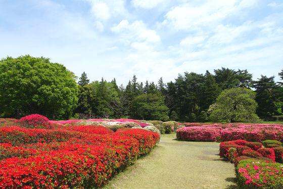 神代植物公園 ツツジ