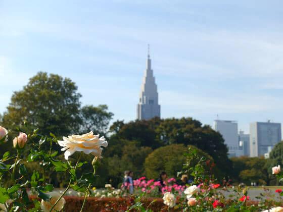 新宿御苑 バラ 開花状況