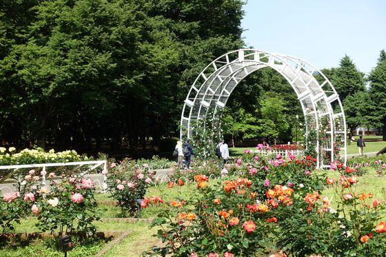 代々木公園 バラ 開花状況