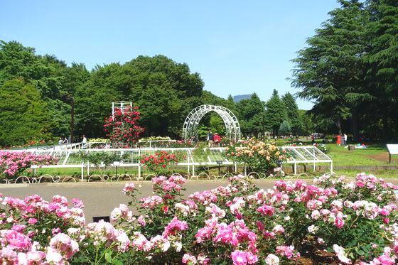 代々木公園 バラ