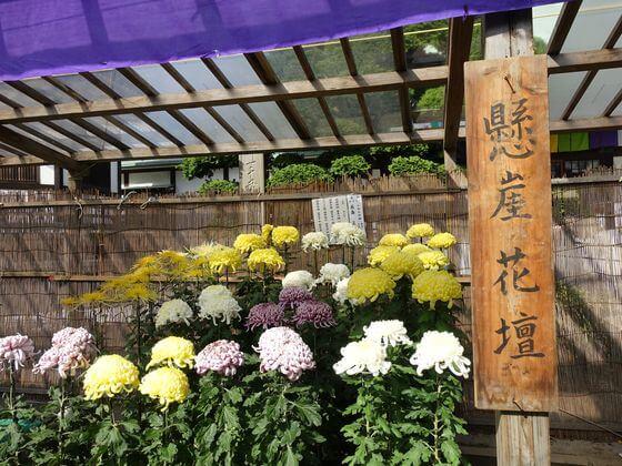 江戸川区 菊