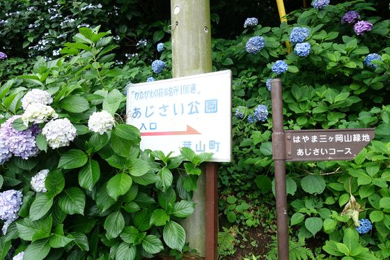 葉山あじさい公園 入口
