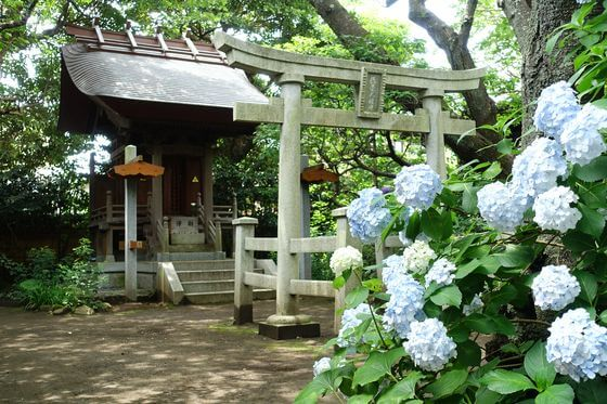 鎌倉 宝戒寺 アジサイ