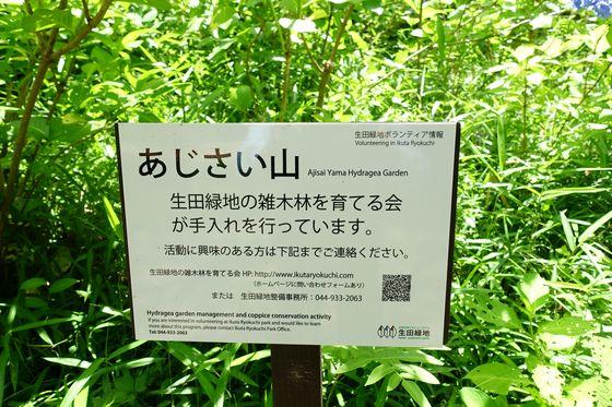 生田緑地 あじさい山