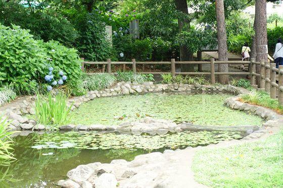 小平 あじさい公園 池