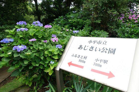 小平市立あじさい公園