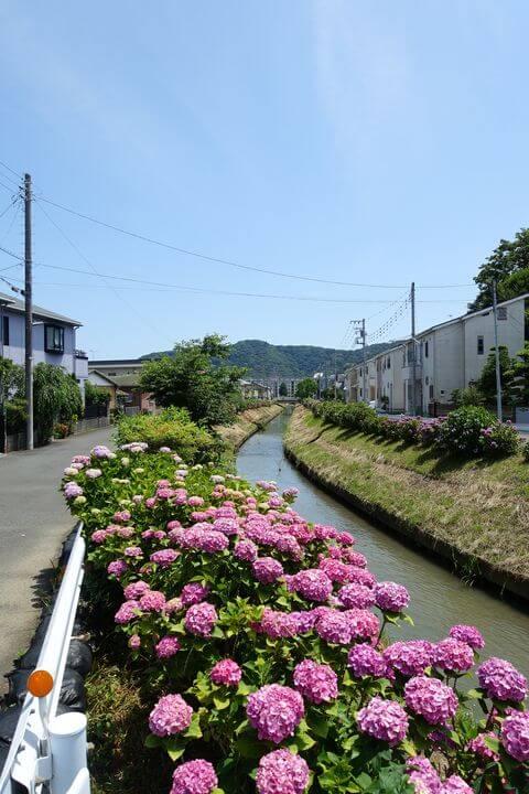 平塚 河内川