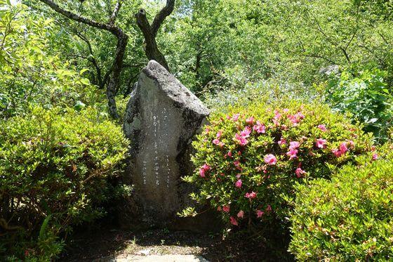 京王百草園 サツキ