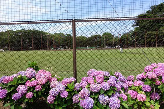 野島公園 野球場