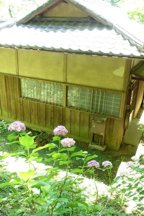 三渓園 紫陽花