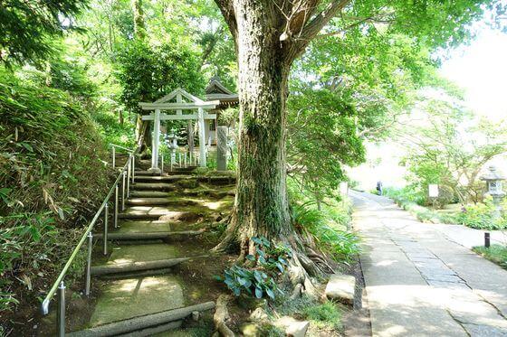 正覚寺 横浜 紫陽花