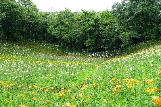 ところざわのゆり園 見晴の丘