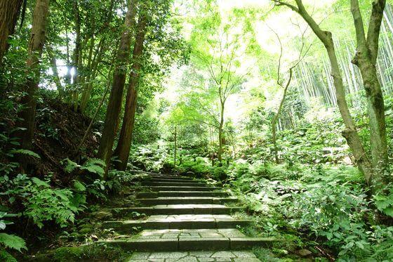 瑞泉寺 鎌倉 アジサイ
