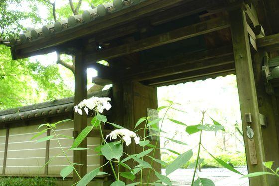 瑞泉寺 鎌倉 紫陽花