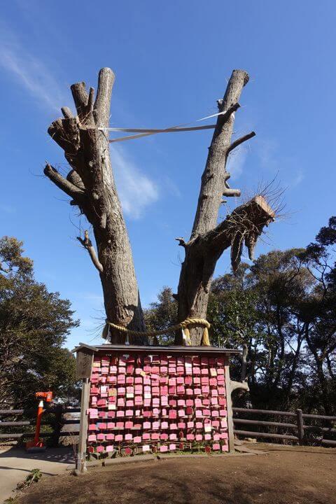 むすびの樹