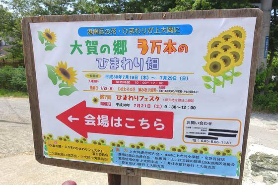 大賀の郷ひまわり畑