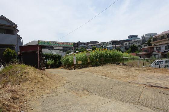 大賀の郷 ひまわり畑