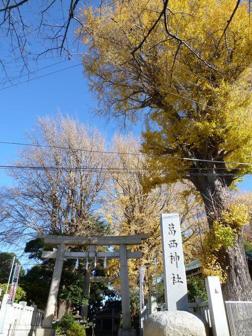 葛西神社 銀杏