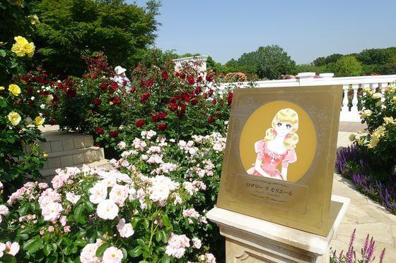 ベルサイユのばら 京成バラ園