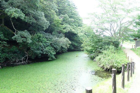 佐倉城 水堀