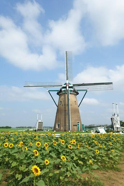 オランダ風車リーフデ ひまわり