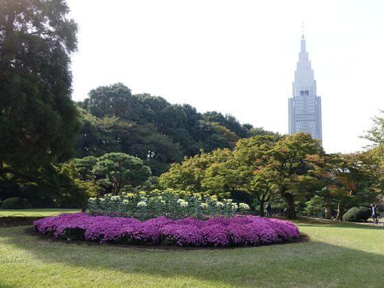 新宿御苑 菊まつり