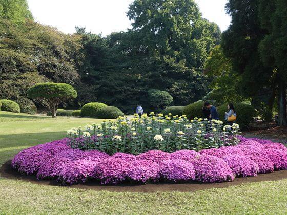 新宿御苑 菊花壇
