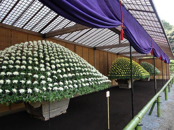新宿御苑 大作り花壇