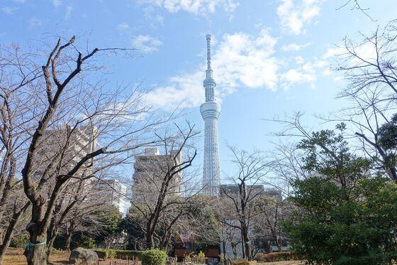 隅田公園 スカイツリー