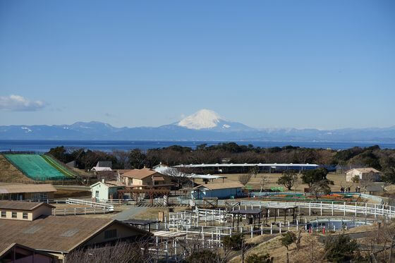 ソレイユの丘 富士山