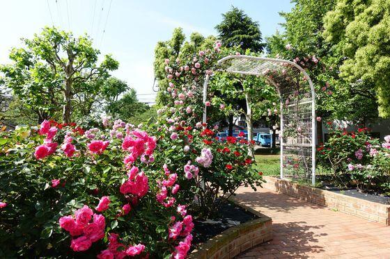 宇喜田東公園 バラ