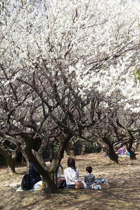 赤塚 梅園