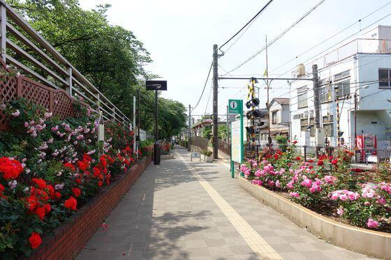 荒川二丁目駅 薔薇