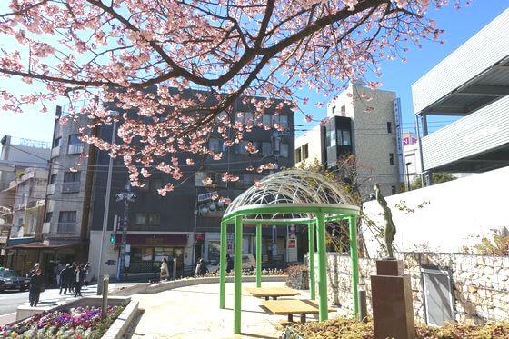花ひろば 熱海桜