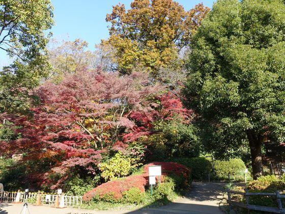 田園調布せせらぎ公園 紅葉