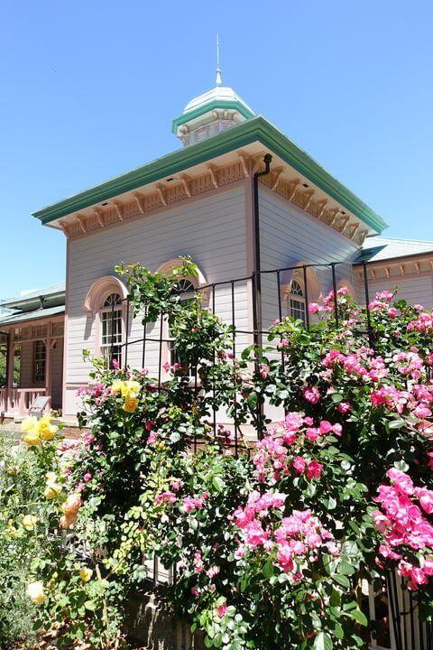 八幡山公園 バラ