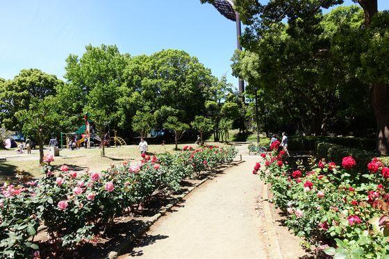 平塚市総合公園 バラ園 北側