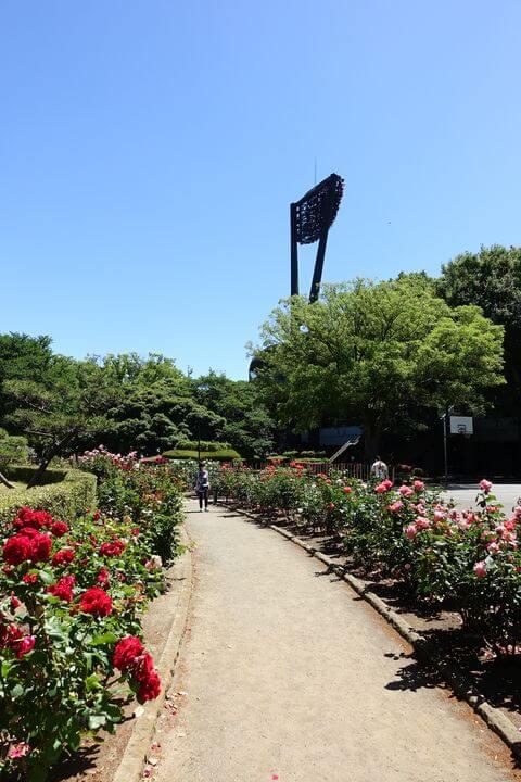 総合公園 バラ園