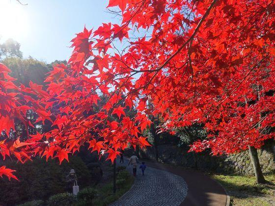 生田緑地 紅葉 状況