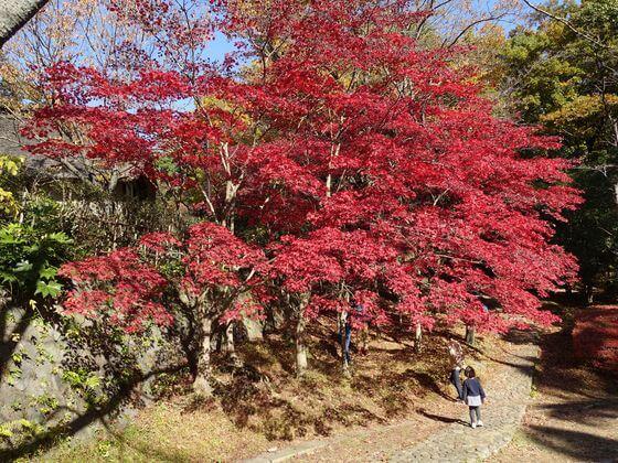 生田緑地 紅葉