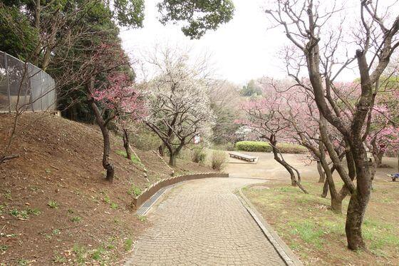 生田緑地 梅園